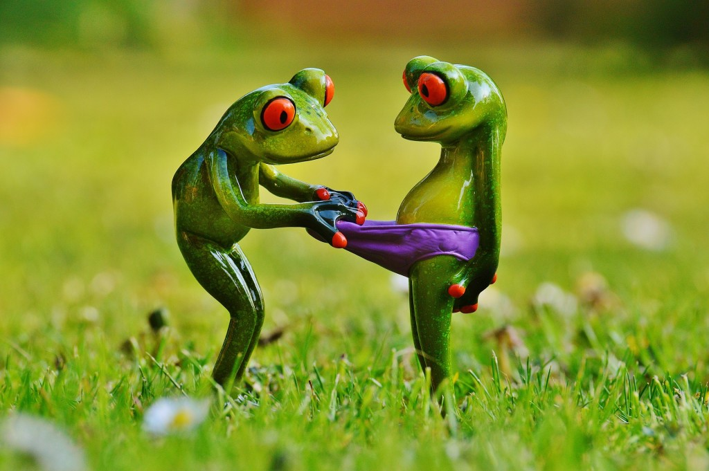 frogs-1347638_1920