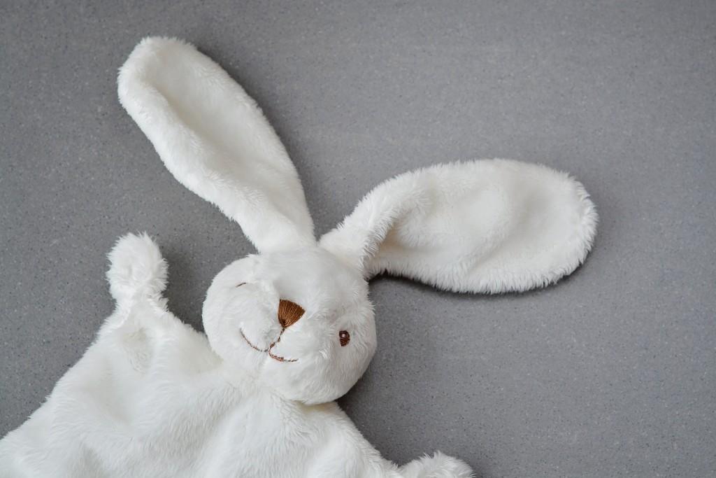 hare-1244405_1920